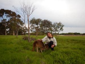 kirchner kangaroo