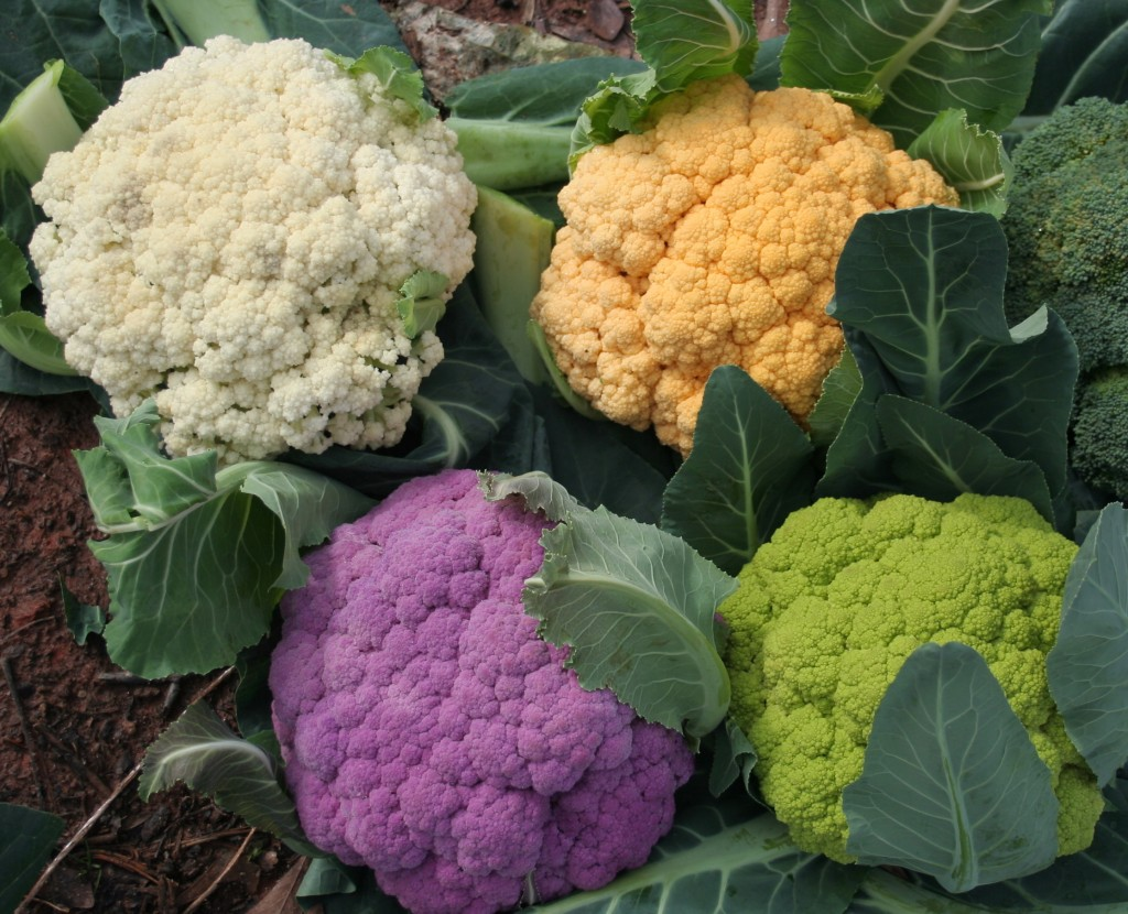 The edible flower cauliflower the benefits of healthy eating
