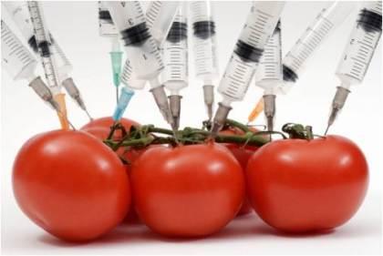 codex tomates