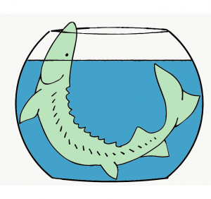 A cartoon rendering of an sturgeon fish , too large for the fishbowl containing it.