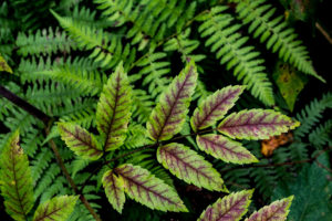 green leaf w ferns