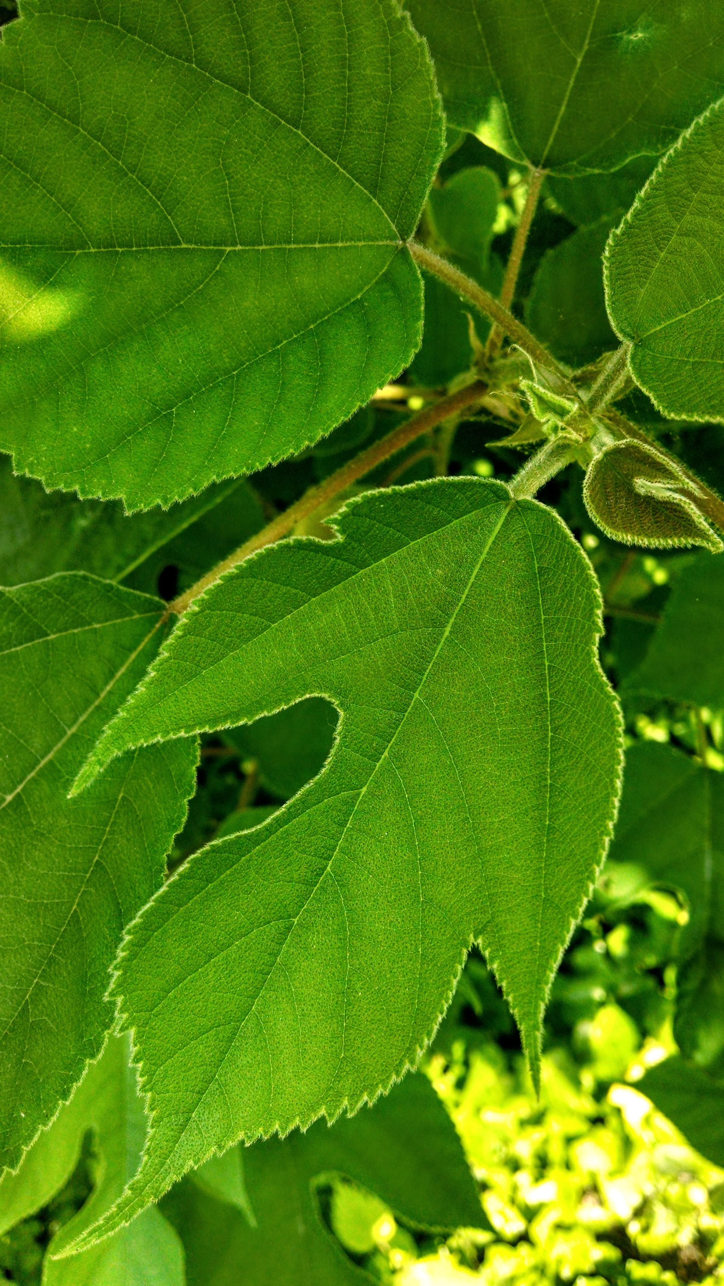Paper Mulberry Jesslyn Mundy