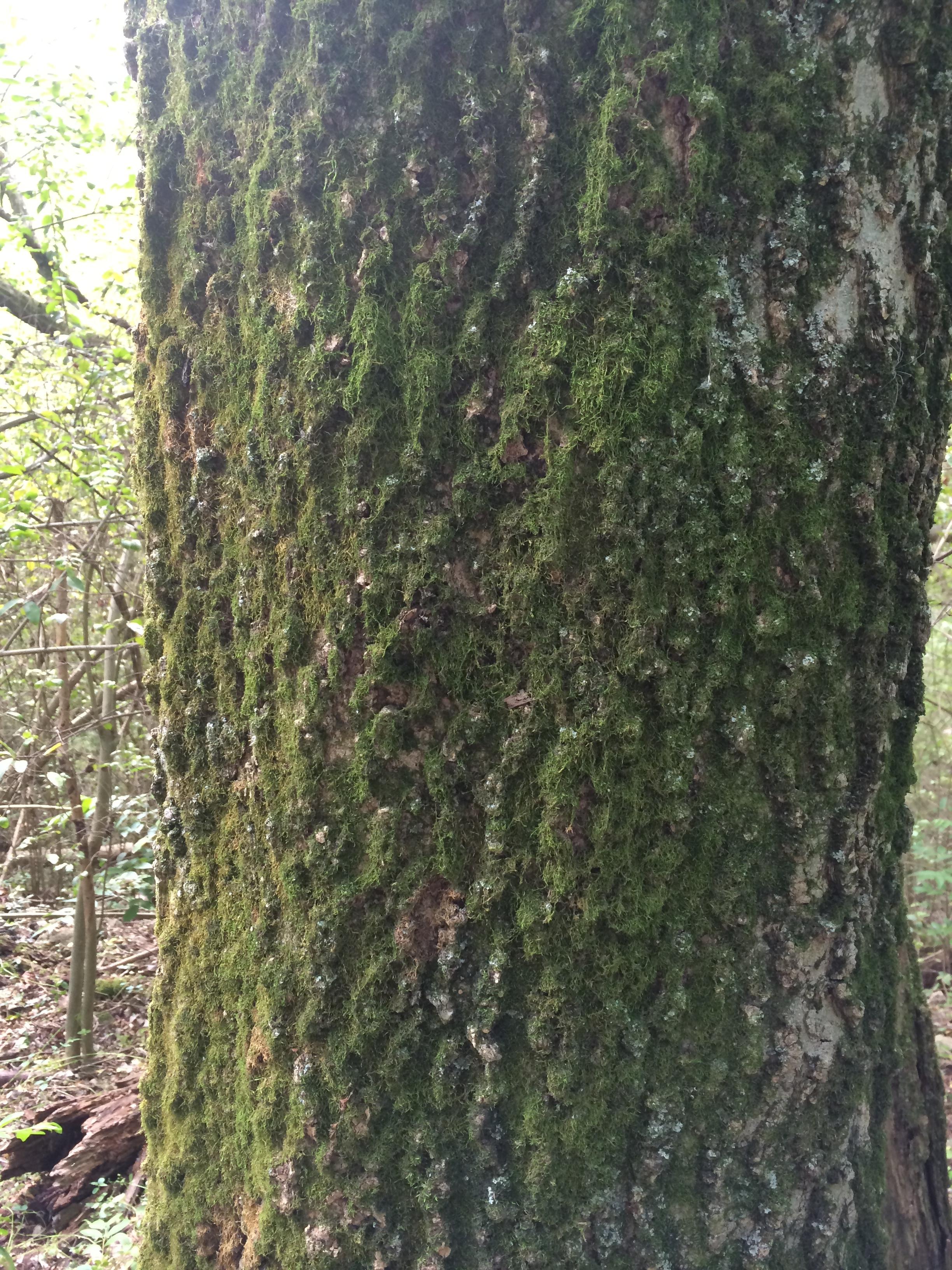 hackberry singles Hackberry park, wahoo, nebraska 23 likes 2,177 were here park.
