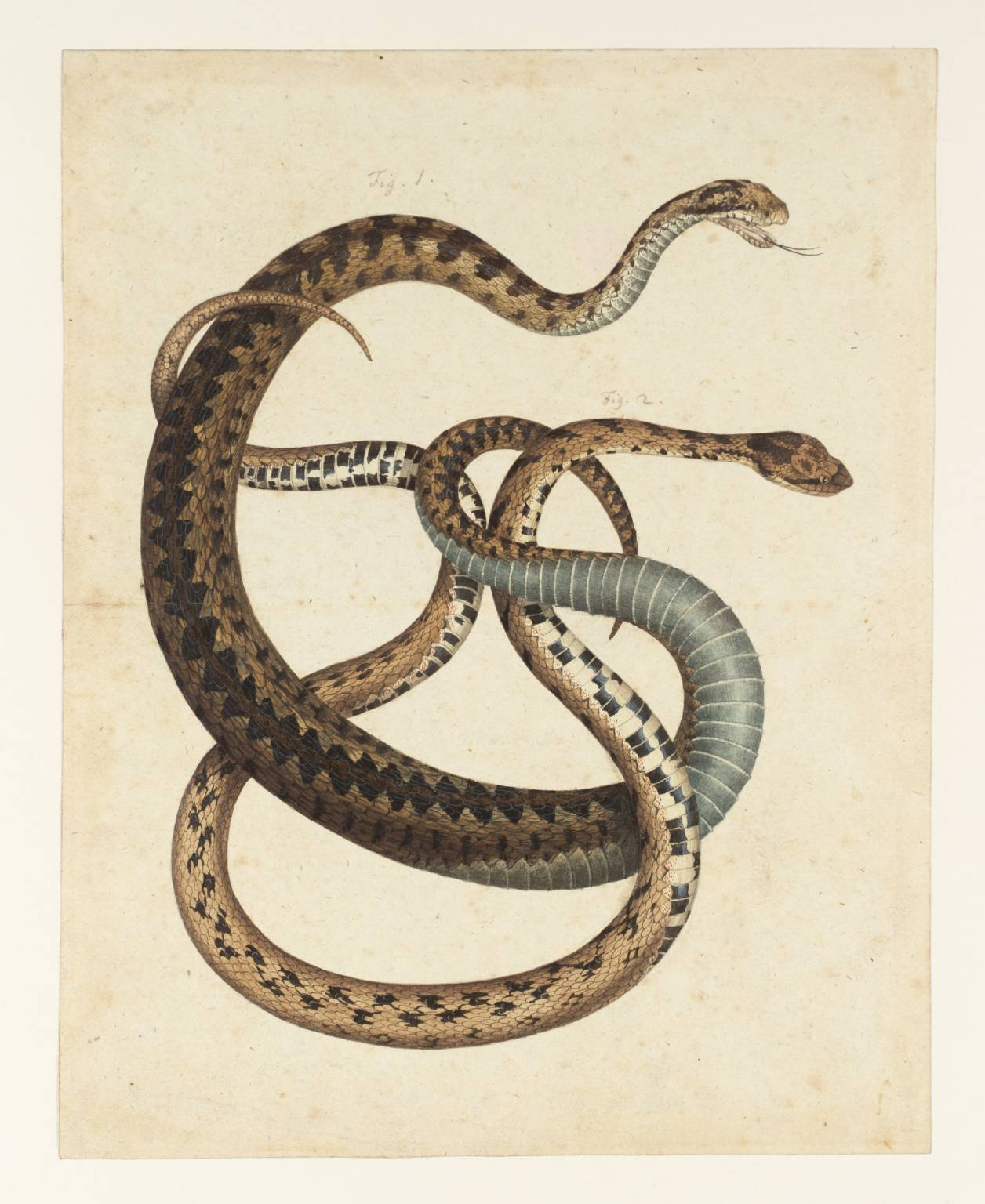 Snakes As Symbols In Art Rileys Focused Inquiry Blog