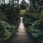 bridge-daylight-environment-775201