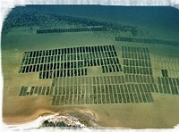 How To Start An Oyster Farm And Why You Should Jonathans Blog