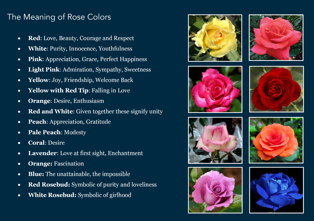 The Many Shades Of Roses Focused Inquiry Class 112