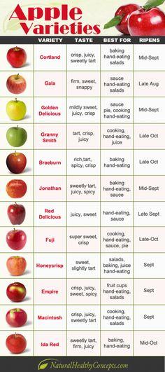 Apples | Tara's VCU Studies