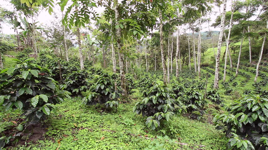 Advantages Of Shade Grown Coffee