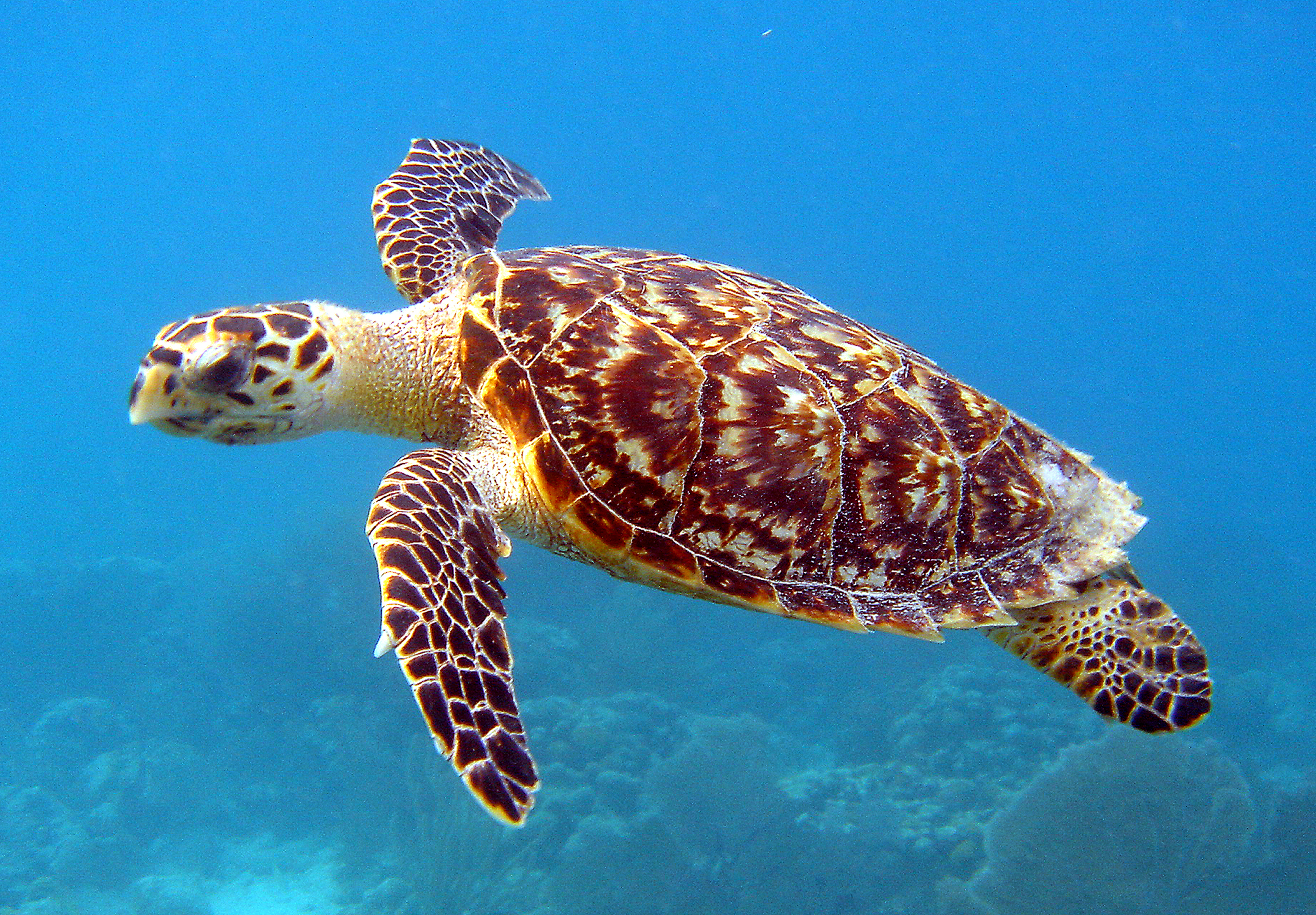 how many different types of sea turtles are there? | sea turtle blog