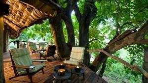 Chillin in a Tree